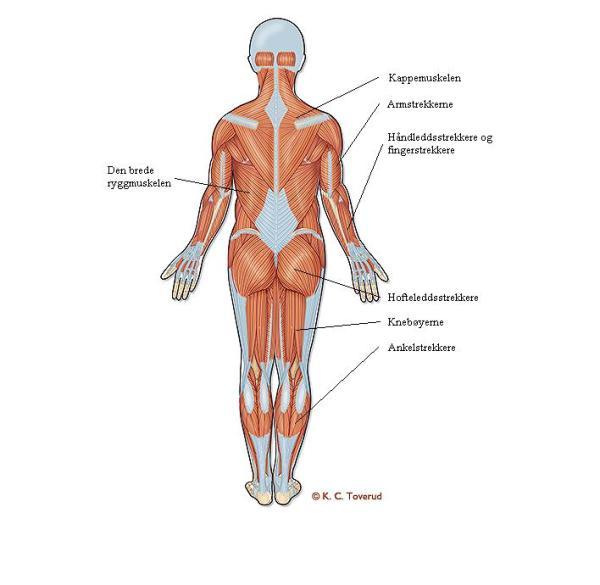 norske snapchat nakenbilder muskler i kroppen navn